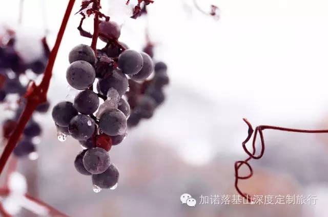 winery5
